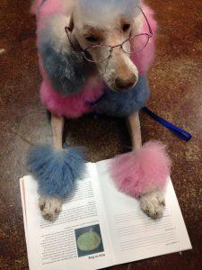 "Tikki studies ""How to Blog"" on the job"