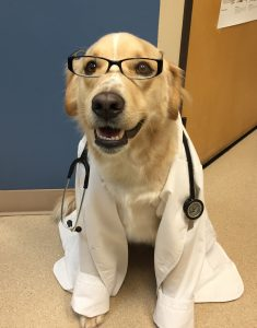 "Dr. Rigby says, ""When was your pets last wellness screen?"""