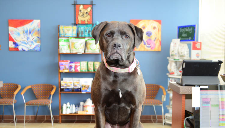 Veterinary Reiki Therapy at Cascade Summit Animal Hospital
