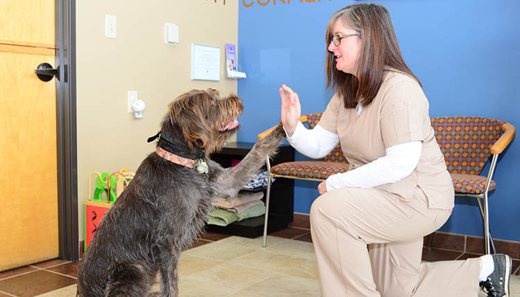 Online Survey for clients of Cascade Summit Animal Hospital