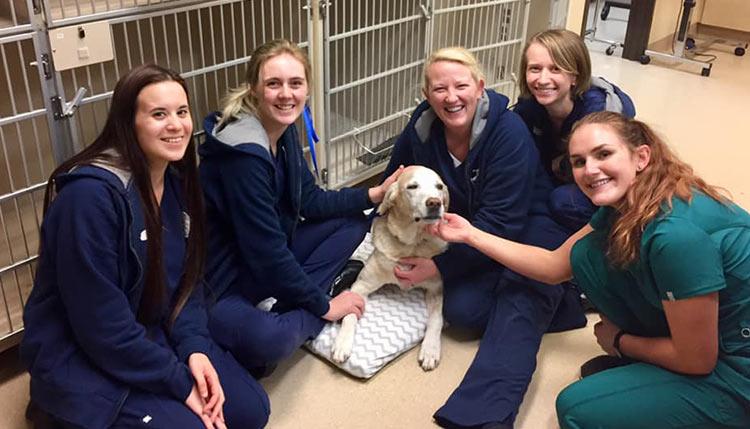 Canine Health Care Cascade Summit Animal Hospital
